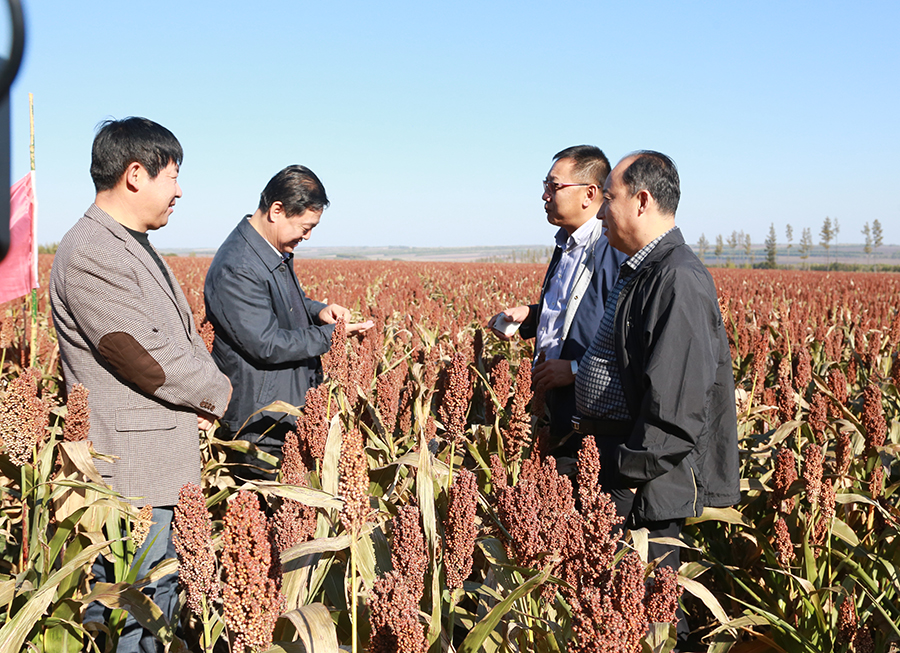 我院探索冷凉地区调整农业种植结构